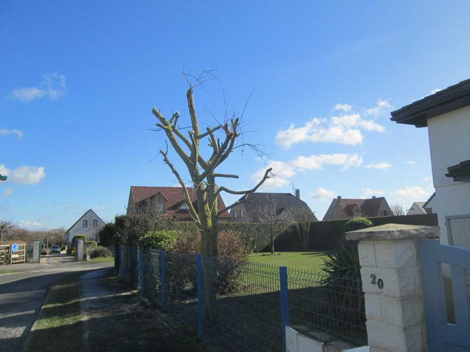 elagage d'arbre à Cambrai arras et douai Green Net Services